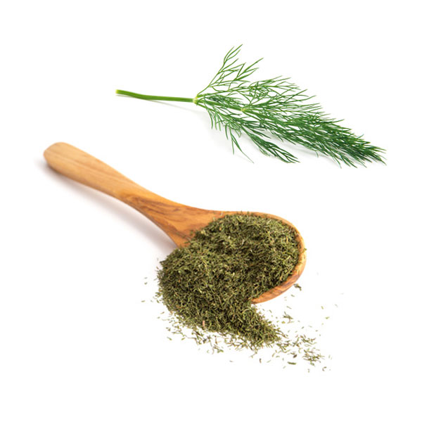 Dill10 com – Dill: Properties, benefits and contraindications